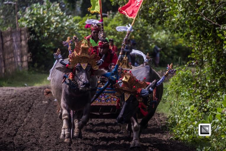 Indonesia-Bali-Makepung_Jembrana_Cup-Tuwed_Village_Circuit-148
