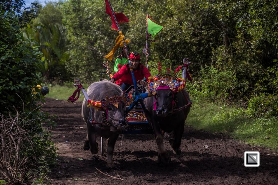 Indonesia-Bali-Makepung_Jembrana_Cup-Tuwed_Village_Circuit-156
