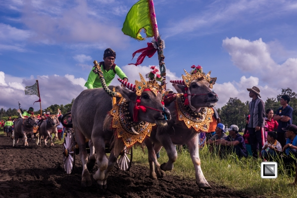 Indonesia-Bali-Makepung_Jembrana_Cup-Tuwed_Village_Circuit-16