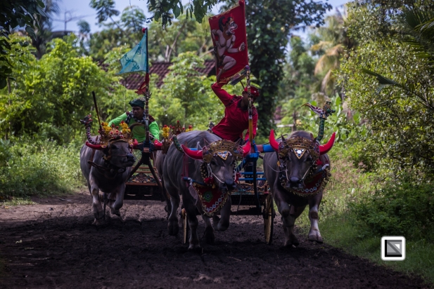 Indonesia-Bali-Makepung_Jembrana_Cup-Tuwed_Village_Circuit-169
