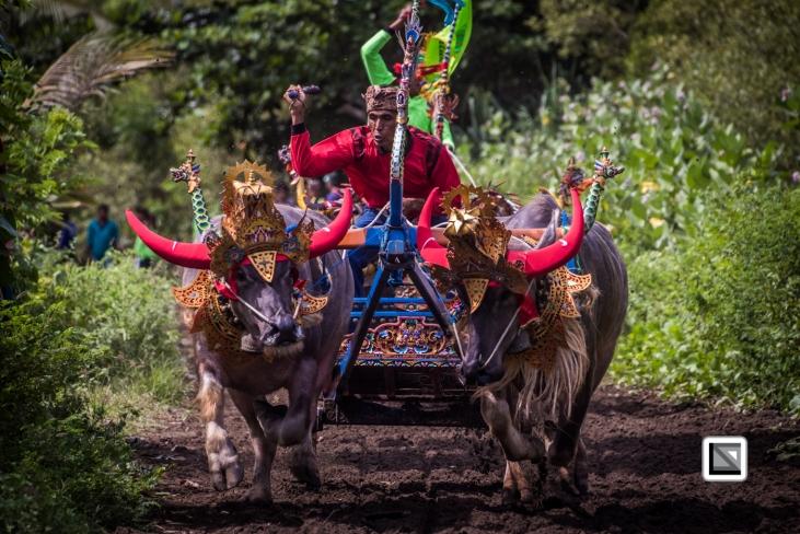 Indonesia-Bali-Makepung_Jembrana_Cup-Tuwed_Village_Circuit-183