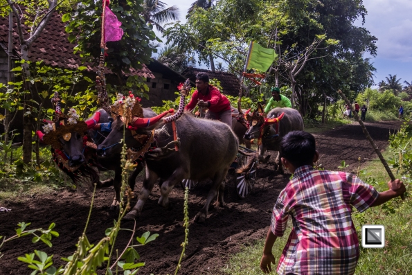 Indonesia-Bali-Makepung_Jembrana_Cup-Tuwed_Village_Circuit-188