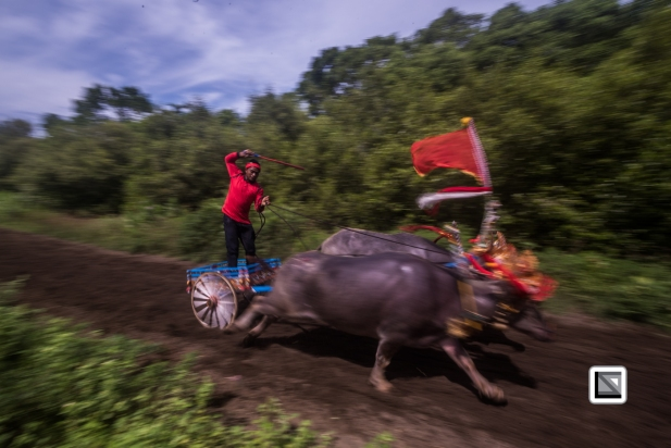 Indonesia-Bali-Makepung_Jembrana_Cup-Tuwed_Village_Circuit-198