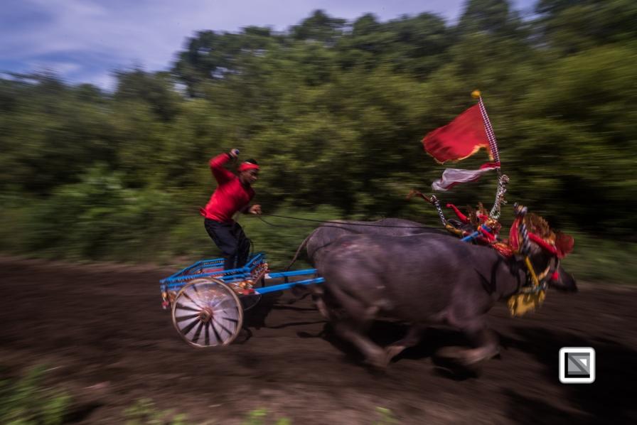Indonesia-Bali-Makepung_Jembrana_Cup-Tuwed_Village_Circuit-199