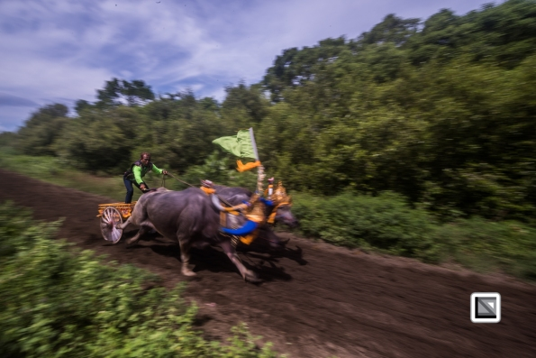Indonesia-Bali-Makepung_Jembrana_Cup-Tuwed_Village_Circuit-200