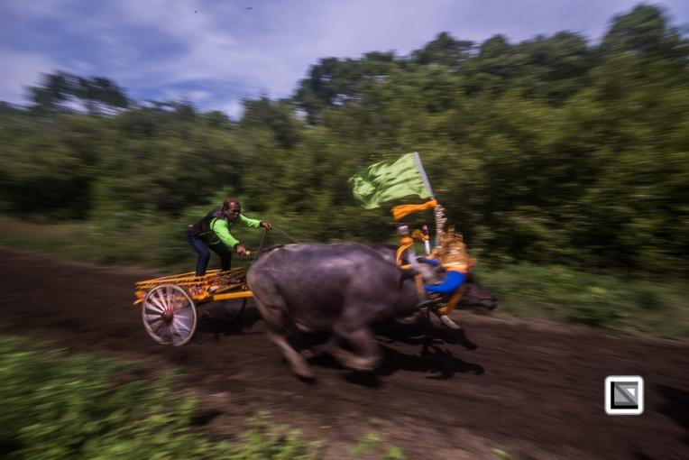 Indonesia-Bali-Makepung_Jembrana_Cup-Tuwed_Village_Circuit-201