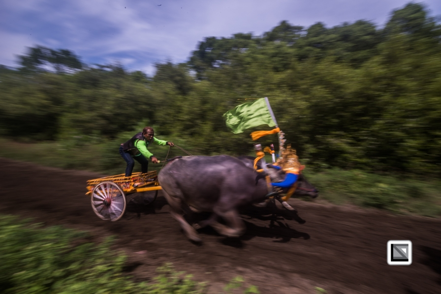 Indonesia-Bali-Makepung_Jembrana_Cup-Tuwed_Village_Circuit-201