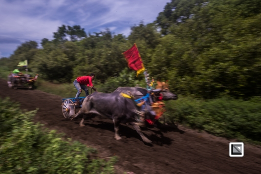 Indonesia-Bali-Makepung_Jembrana_Cup-Tuwed_Village_Circuit-203