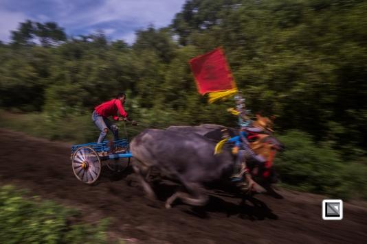 Indonesia-Bali-Makepung_Jembrana_Cup-Tuwed_Village_Circuit-204
