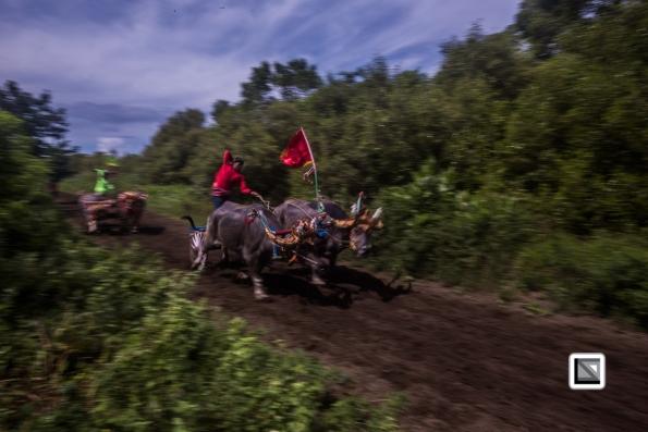 Indonesia-Bali-Makepung_Jembrana_Cup-Tuwed_Village_Circuit-206