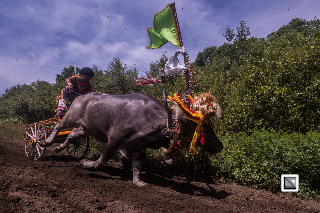 Indonesia-Bali-Makepung_Jembrana_Cup-Tuwed_Village_Circuit-218