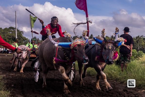 Indonesia-Bali-Makepung_Jembrana_Cup-Tuwed_Village_Circuit-25-2