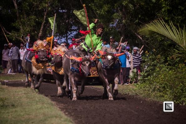 Indonesia-Bali-Makepung_Jembrana_Cup-Tuwed_Village_Circuit-34