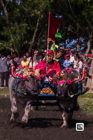 Indonesia-Bali-Makepung_Jembrana_Cup-Tuwed_Village_Circuit-35-2