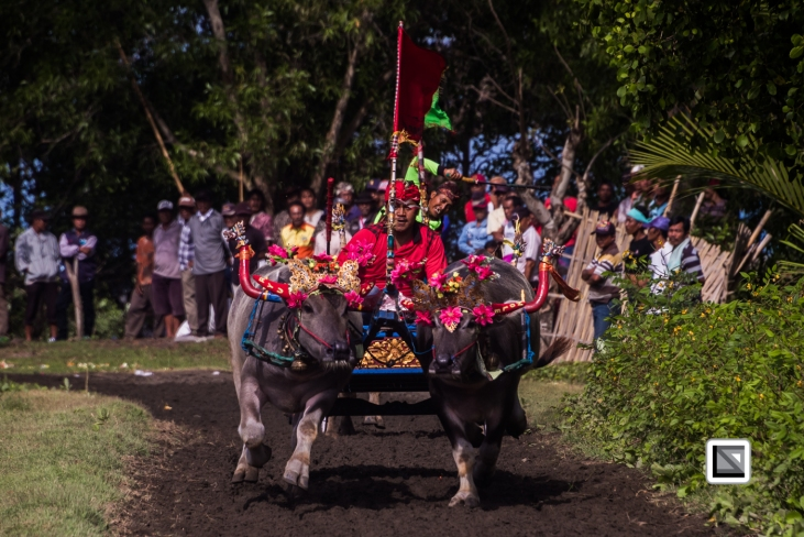 Indonesia-Bali-Makepung_Jembrana_Cup-Tuwed_Village_Circuit-35