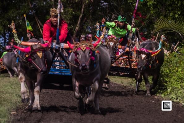 Indonesia-Bali-Makepung_Jembrana_Cup-Tuwed_Village_Circuit-39