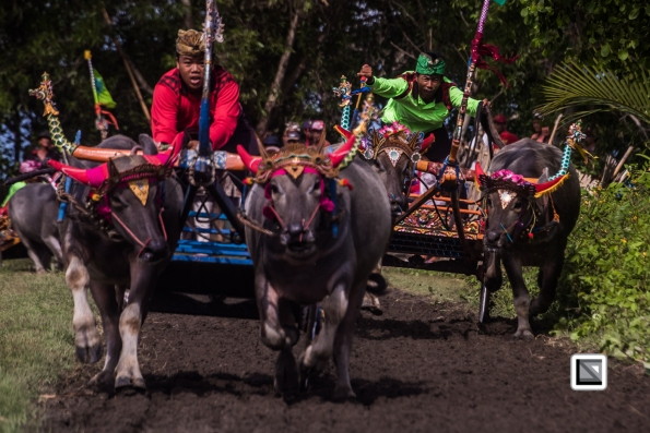 Indonesia-Bali-Makepung_Jembrana_Cup-Tuwed_Village_Circuit-39