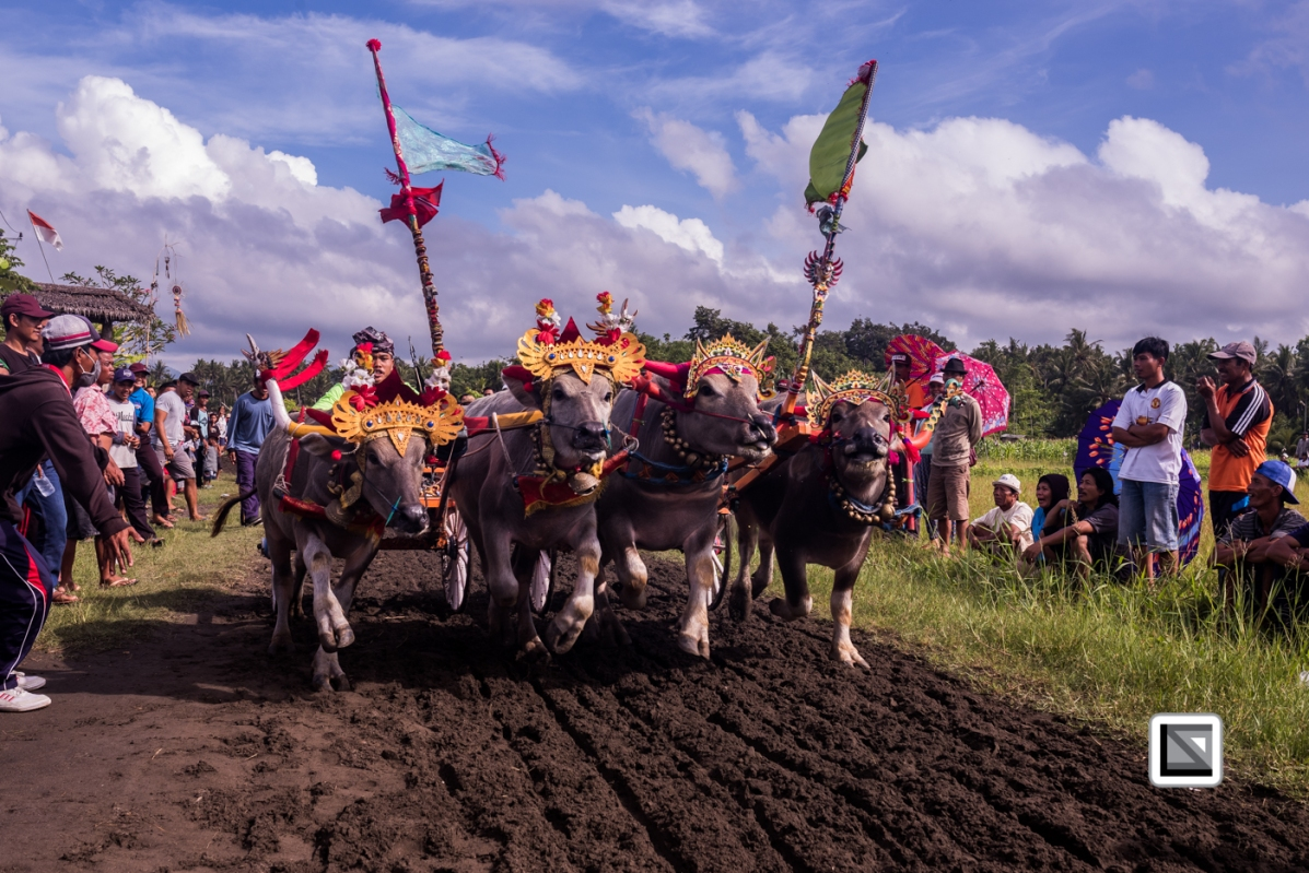 Indonesia-Bali-Makepung_Jembrana_Cup-Tuwed_Village_Circuit-4
