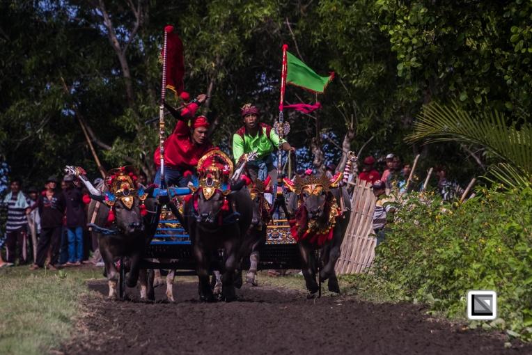 Indonesia-Bali-Makepung_Jembrana_Cup-Tuwed_Village_Circuit-50