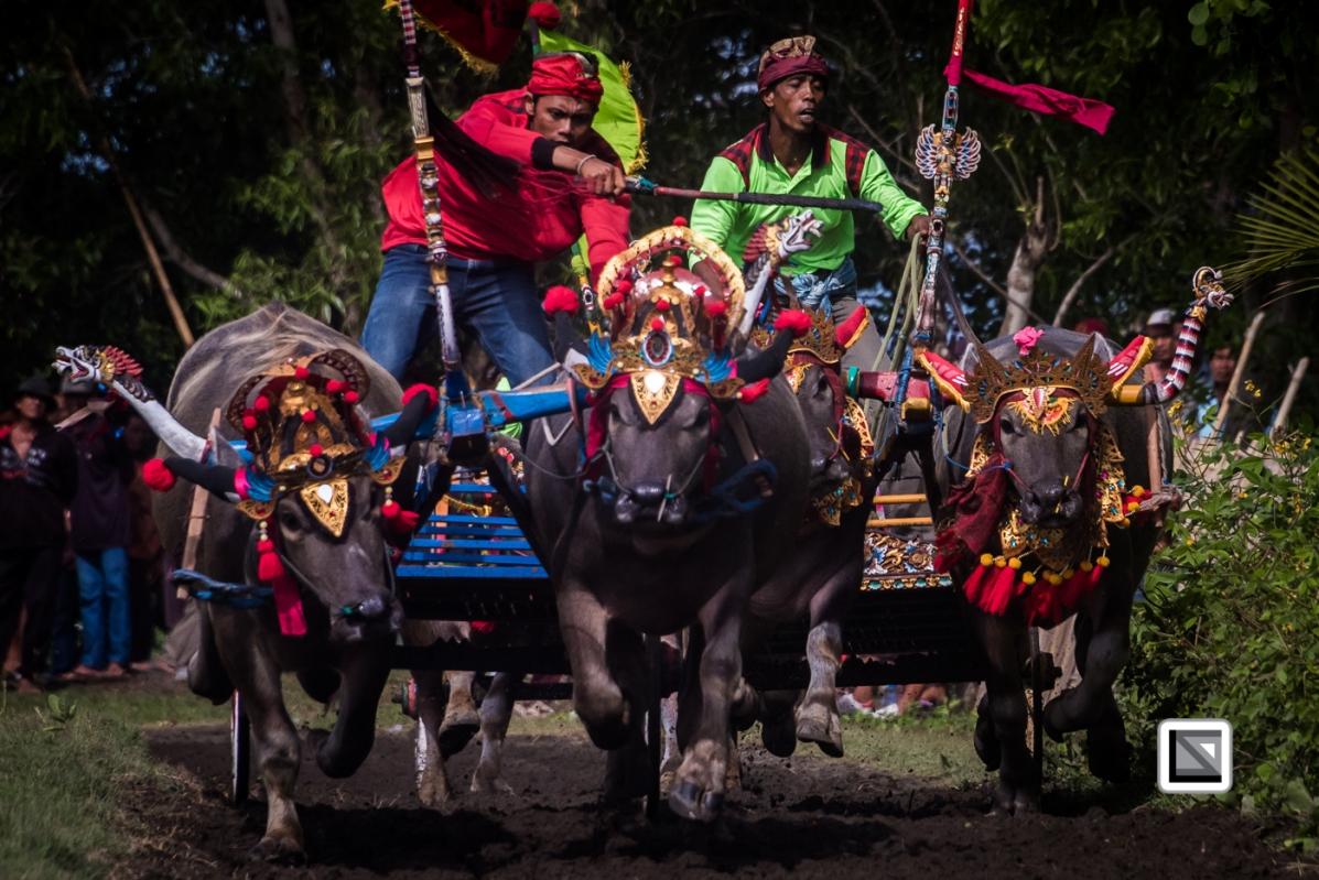 Indonesia-Bali-Makepung_Jembrana_Cup-Tuwed_Village_Circuit-53-2