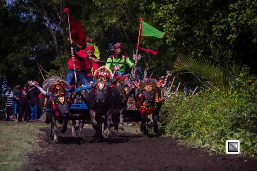 Indonesia-Bali-Makepung_Jembrana_Cup-Tuwed_Village_Circuit-53