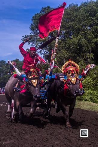 Indonesia-Bali-Makepung_Jembrana_Cup-Tuwed_Village_Circuit-60