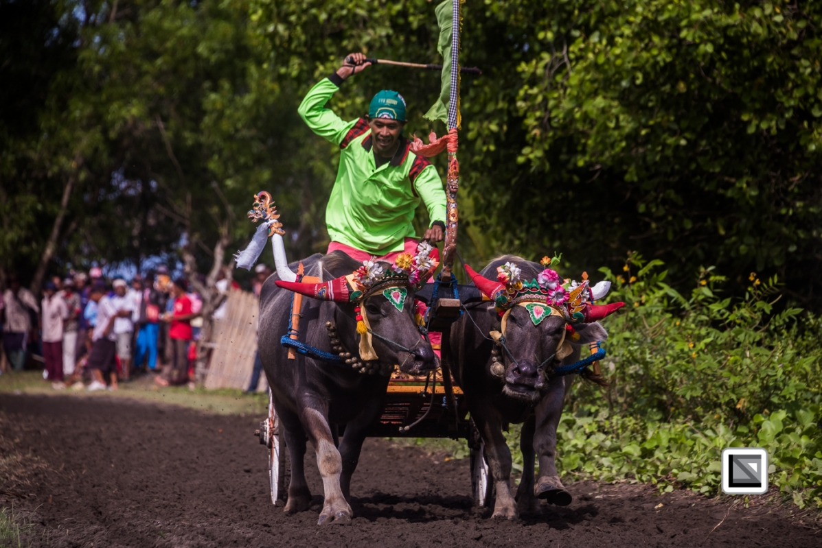 Indonesia-Bali-Makepung_Jembrana_Cup-Tuwed_Village_Circuit-76