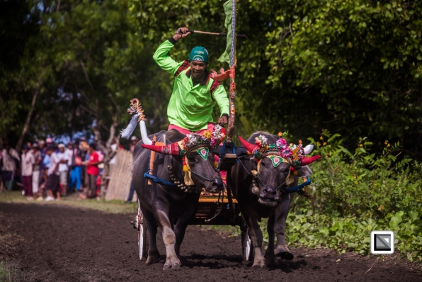 Indonesia-Bali-Makepung_Jembrana_Cup-Tuwed_Village_Circuit-76