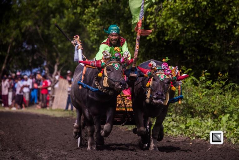 Indonesia-Bali-Makepung_Jembrana_Cup-Tuwed_Village_Circuit-77
