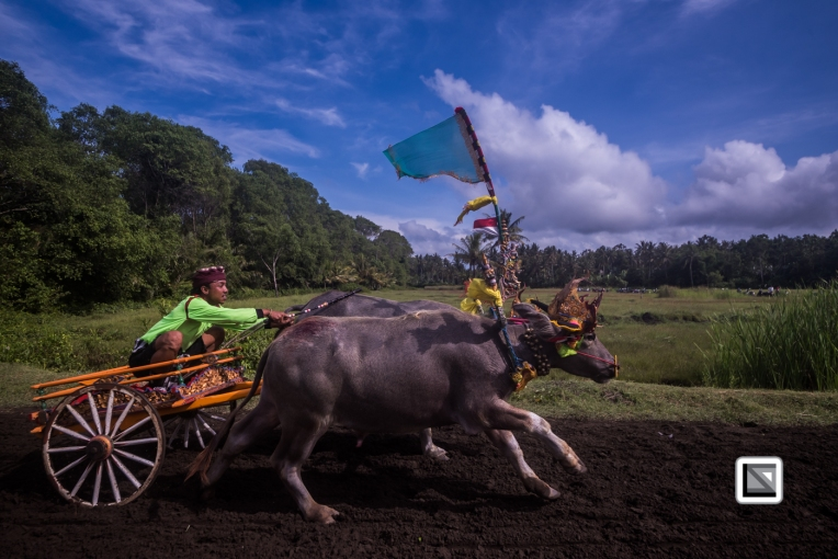 Indonesia-Bali-Makepung_Jembrana_Cup-Tuwed_Village_Circuit-78