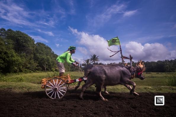 Indonesia-Bali-Makepung_Jembrana_Cup-Tuwed_Village_Circuit-84