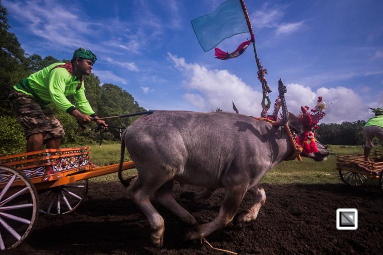 Indonesia-Bali-Makepung_Jembrana_Cup-Tuwed_Village_Circuit-86