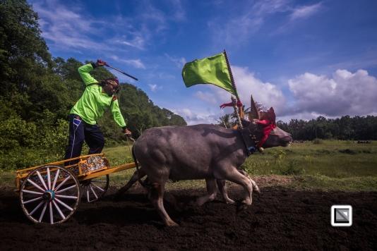Indonesia-Bali-Makepung_Jembrana_Cup-Tuwed_Village_Circuit-91