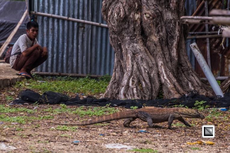 Indonesia-Flores-Komodo_Nationalpark-Rinca_Village-13