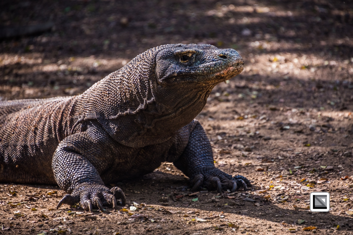Indonesia-Flores-Komodo_Nationalpark-Rinca_Village-18