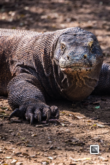 Indonesia-Flores-Komodo_Nationalpark-Rinca_Village-25
