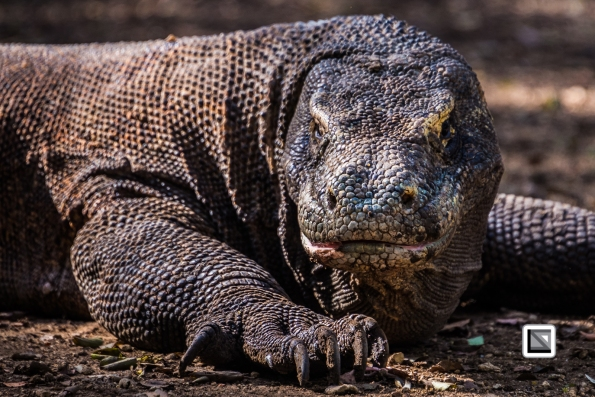 Indonesia-Flores-Komodo_Nationalpark-Rinca_Village-28