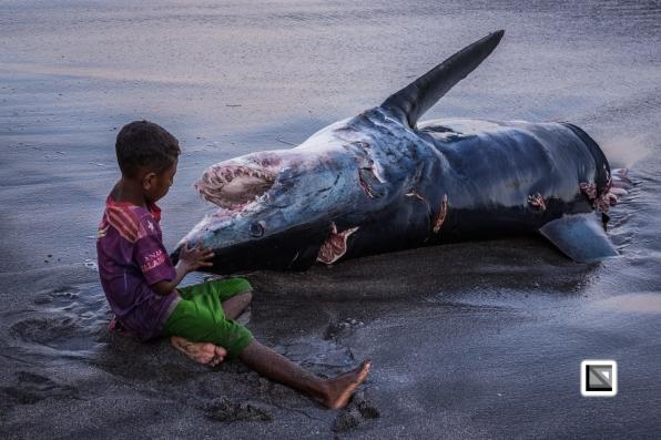 Indonesia-Lembata-Lamalera-101