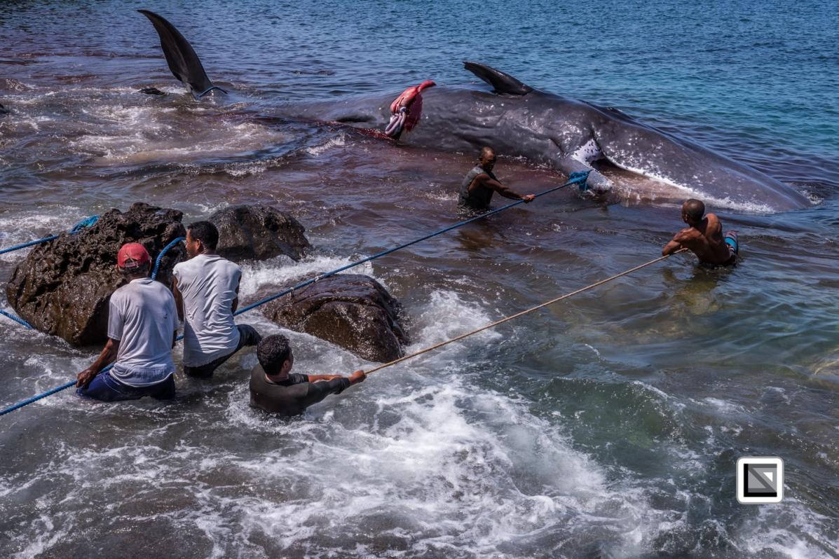 Indonesia-Lembata-Lamalera-456