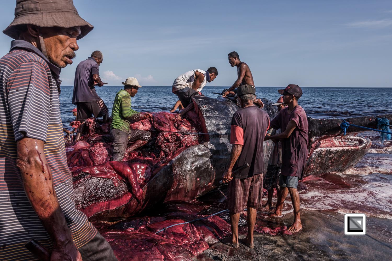 Indonesia-Lembata-Lamalera-498