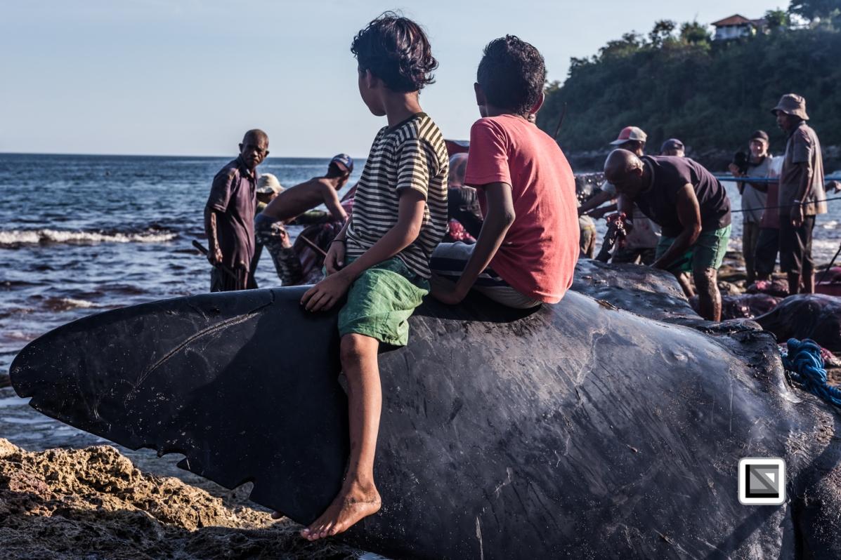 Indonesia-Lembata-Lamalera-526