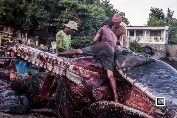 Indonesia-Lembata-Lamalera-563