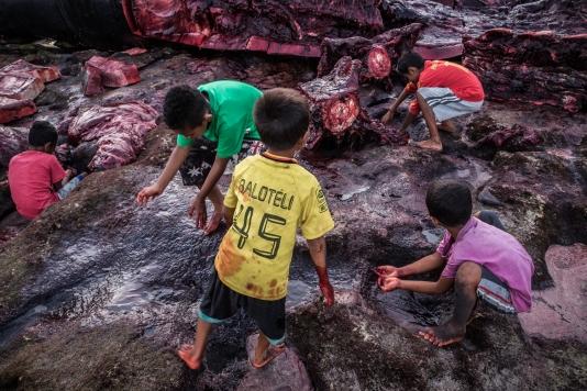 Indonesia-Lembata-Lamalera-604