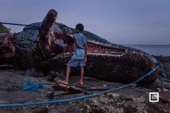Indonesia-Lembata-Lamalera-625