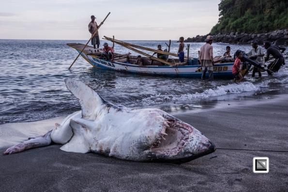 Indonesia-Lembata-Lamalera-87