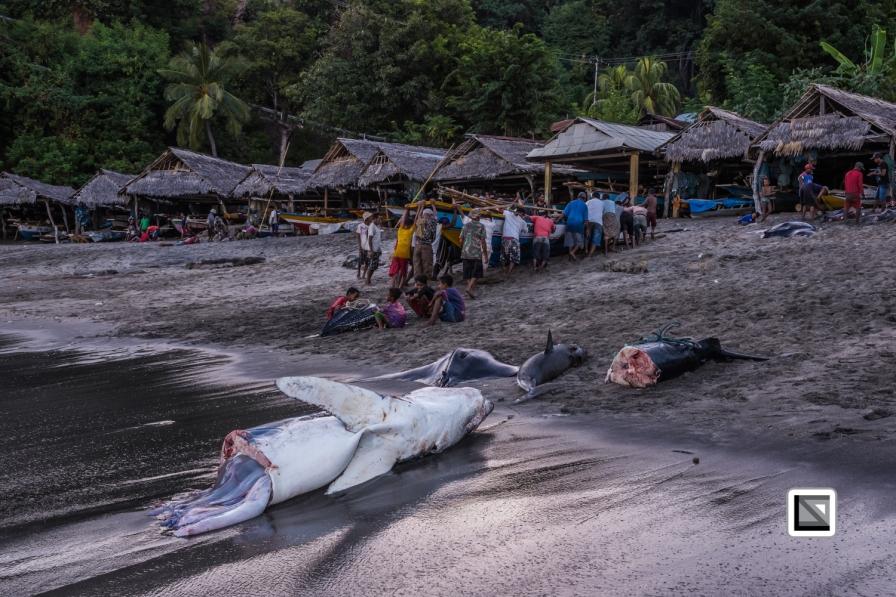 Indonesia-Lembata-Lamalera-89