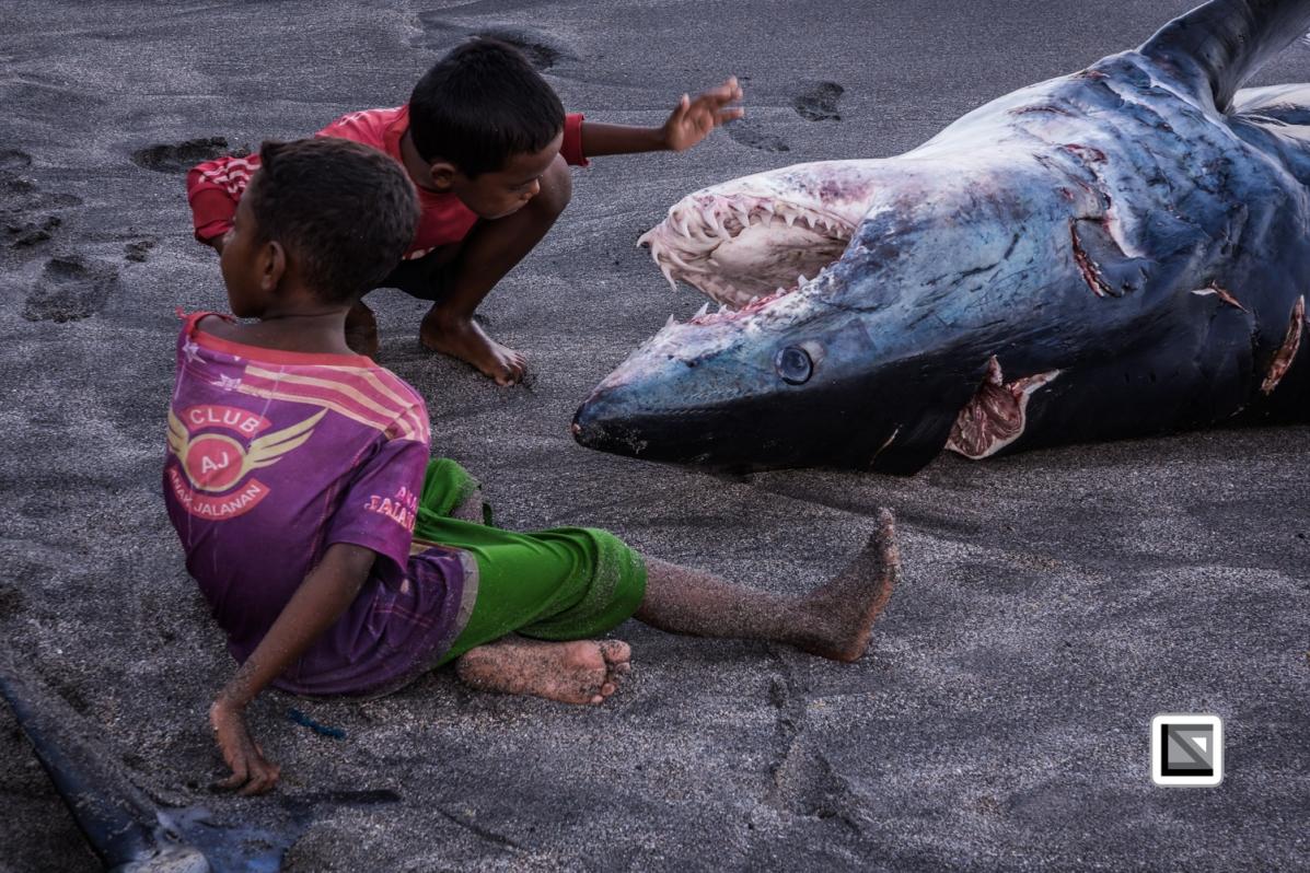 Indonesia-Lembata-Lamalera-95