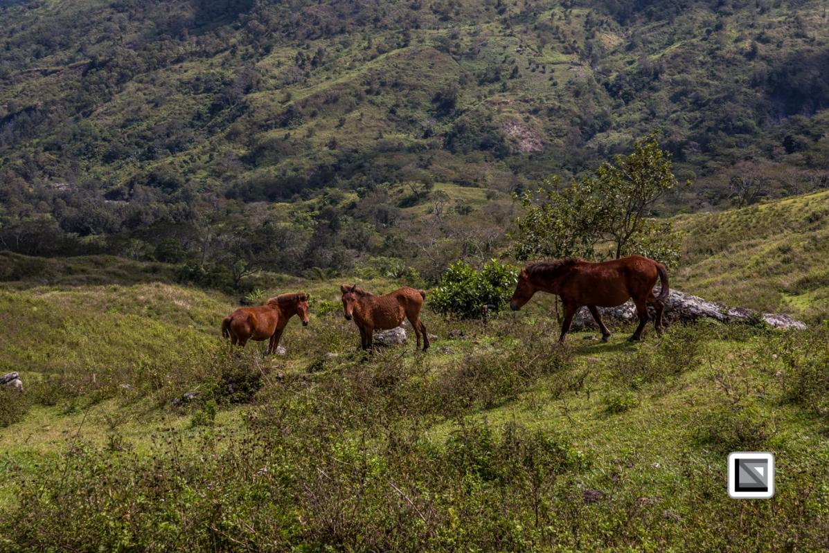 Timor-Leste-165