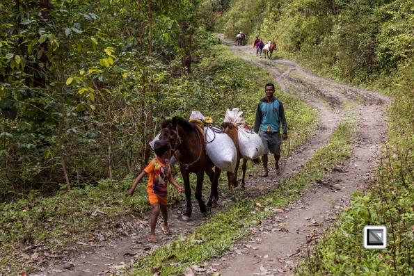 Timor-Leste-529