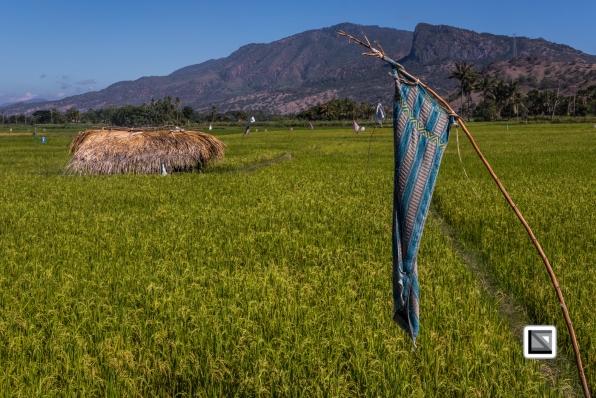 Timor-Leste-633